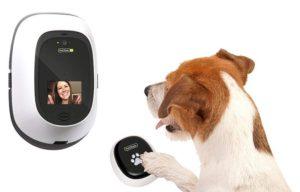 De 6 bedste gadgets til dit kæledyr